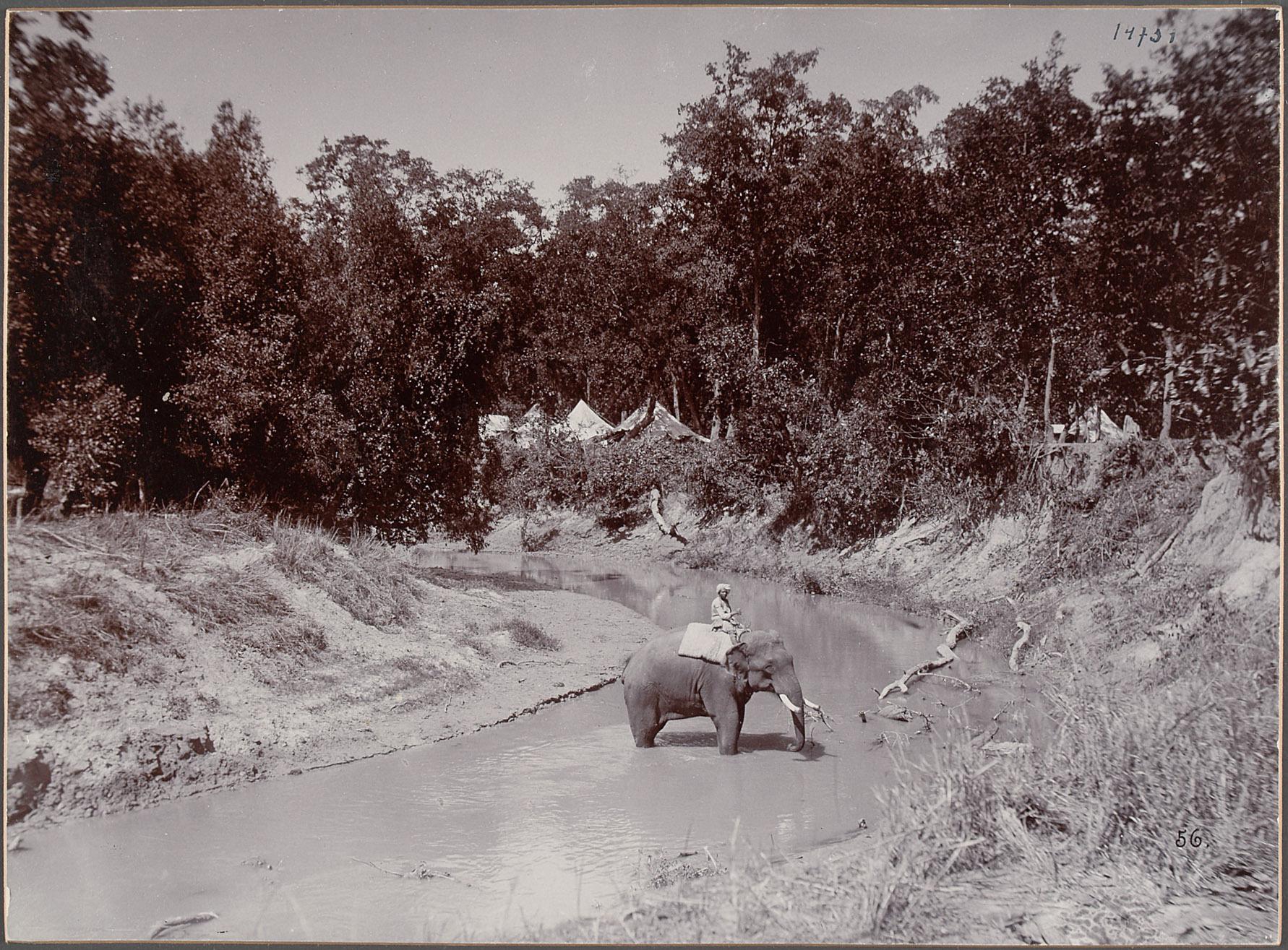 """Nepal, """"Katni-Camp. Elefanten im Bad"""". 21.III.1893 von Eduard Hodek jun."""