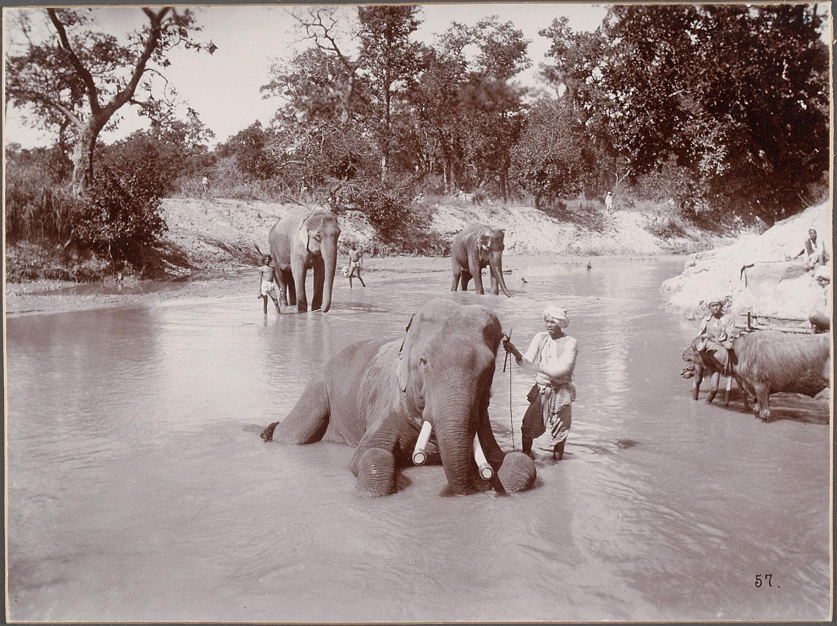 Katni-Camp, Elefanten im Bad von Eduard Hodek jun.