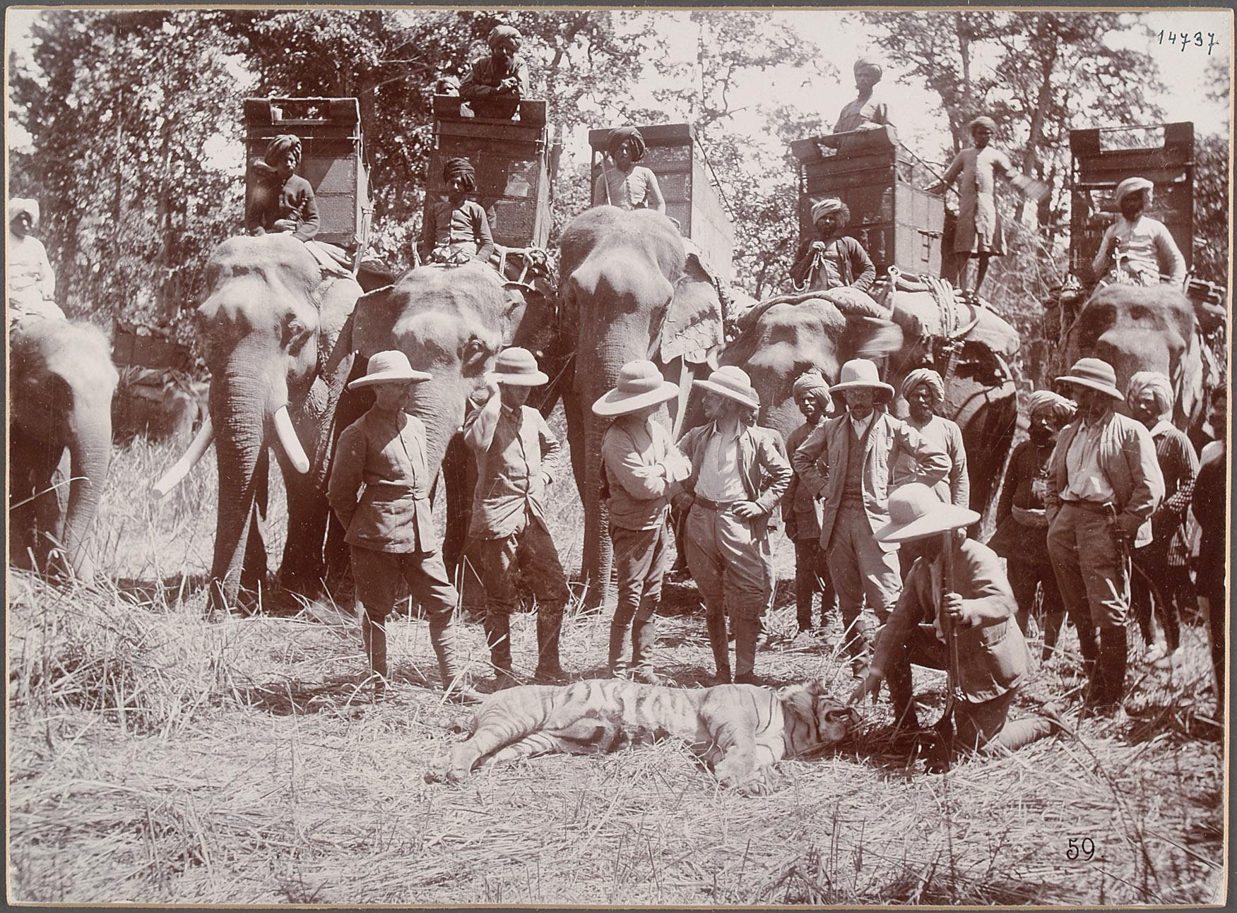"""Nepal, Katni """"Graf Wurmbrands Tiger"""". 22.III.1893  [siehe auch VF_14740 und VF_14749] von Eduard Hodek jun."""
