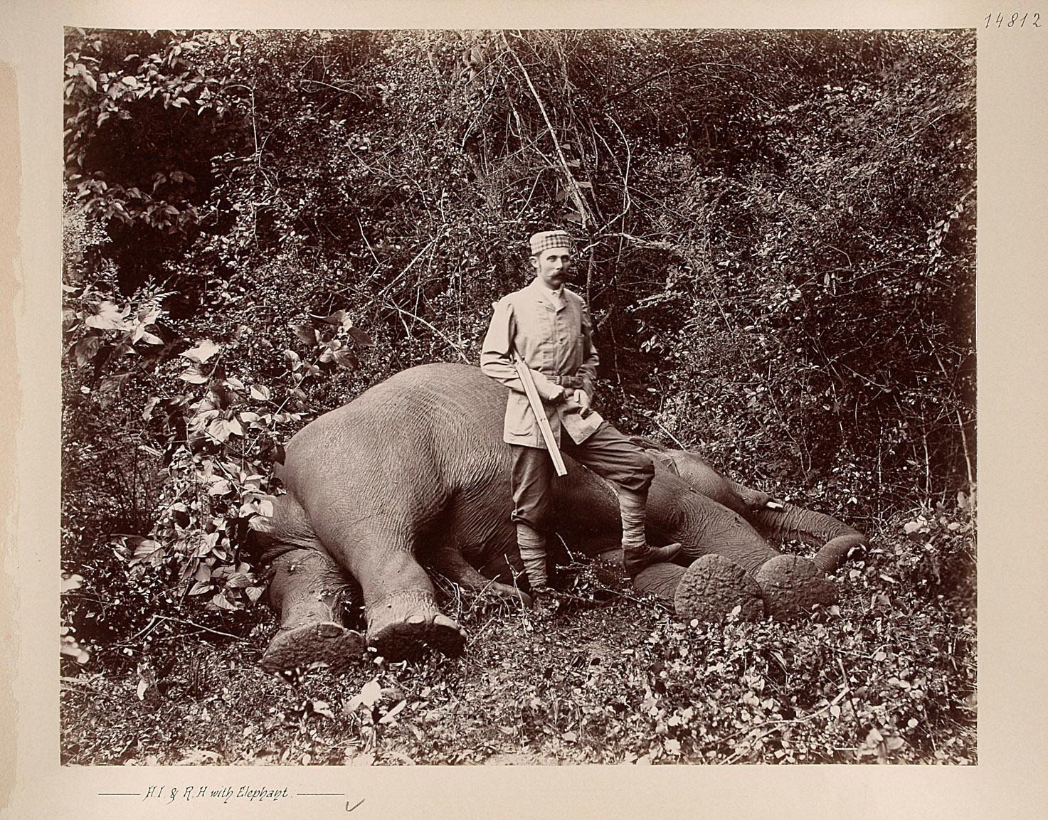 Sr k.u.k. Hoheit beim erlegten Elephanten von Charles Kerr