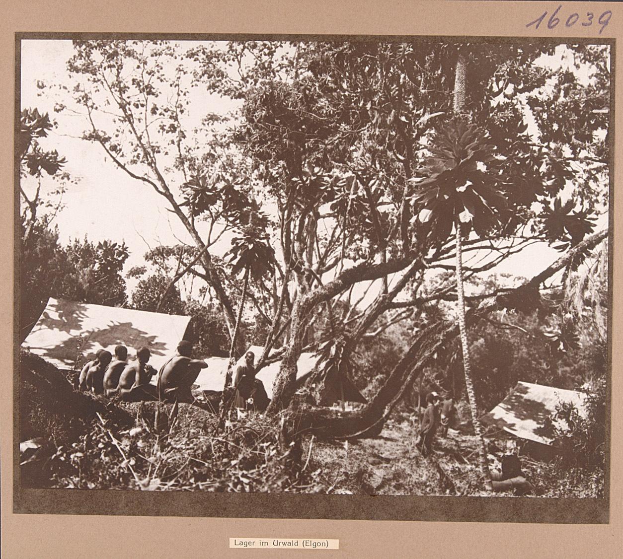 Lager im Urwald (Elgon) von Rudolf Kmunke