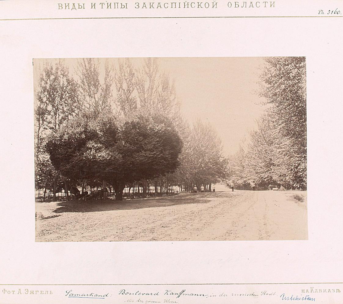 Boulevard Kauffman in der russischen Stadt. Mit der großen Ulme von A.S. German