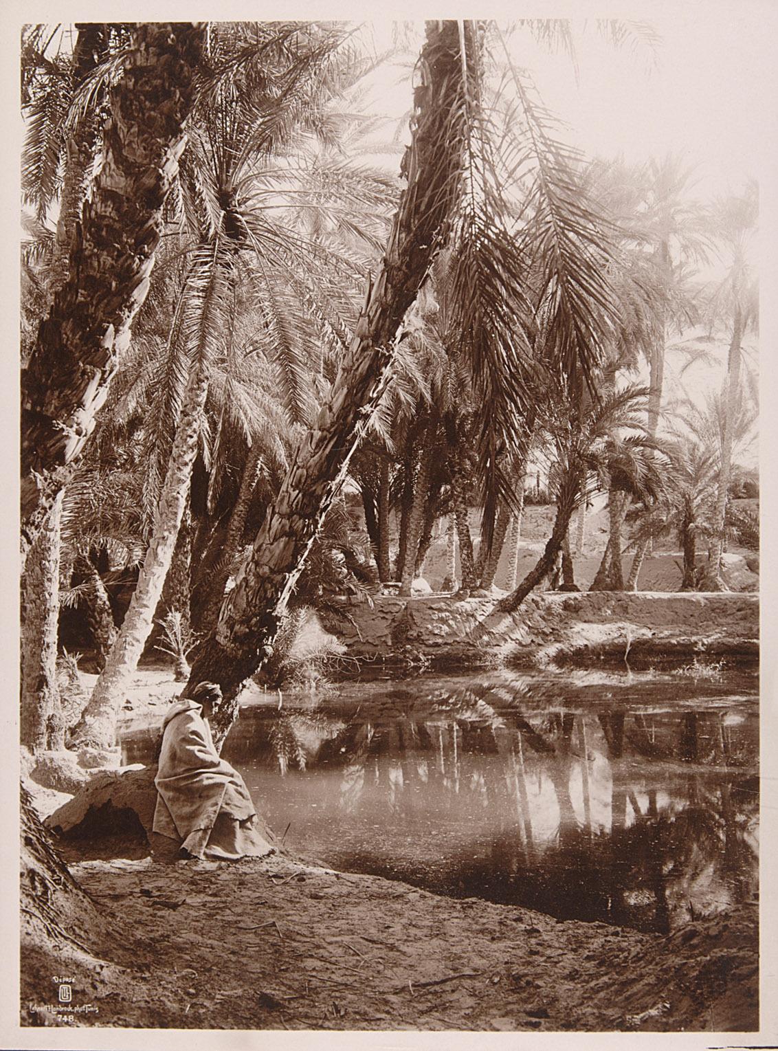 Palmenhain und Teich von Lehnert & Landrock