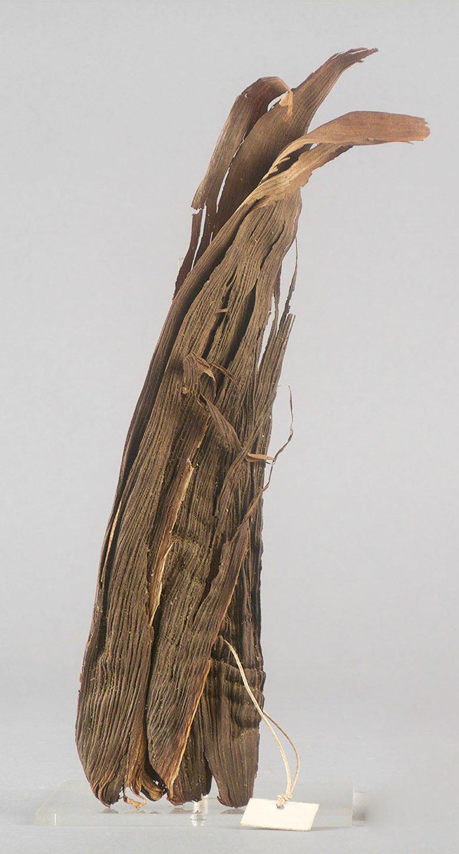 Deckblätter eines Maiskolben