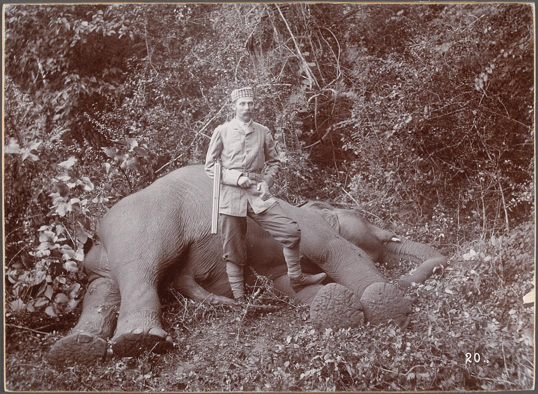 Sr k.u.k. Hoheit beim erlegten Elephanten von Eduard Hodek jun.