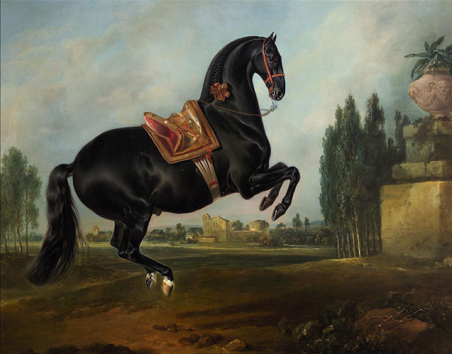 "Kladruber Hengst ""Gitano"" von Johann Georg de Hamilton"